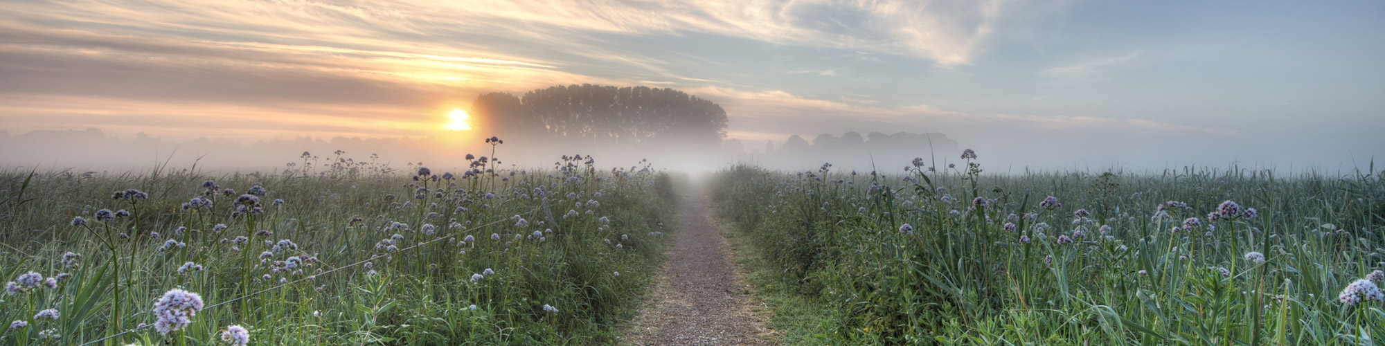 flowery and misty field at sunrise.